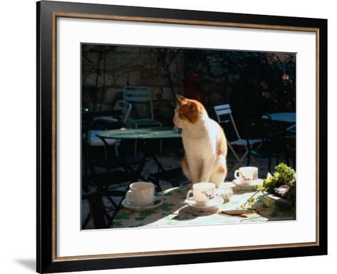 Cat on Table at a Cafe, Paris, FR-Ken Glaser-Framed Art Print
