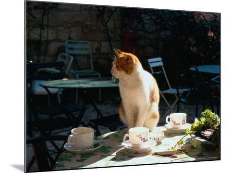 Cat on Table at a Cafe, Paris, FR-Ken Glaser-Mounted Photographic Print