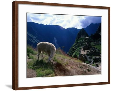 Inca Ruins of Machu Picchu, Llama, Peru-Shirley Vanderbilt-Framed Art Print