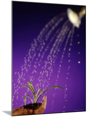 Water Pouring Onto Plant in Hand-Jim McGuire-Mounted Photographic Print
