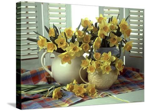 Spring Flower Arrangement of Narcissus in Jugs, Checked Cloth-Erika Craddock-Stretched Canvas Print
