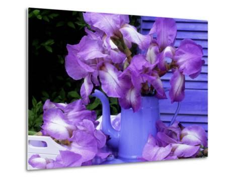 """Bearded Iris """"Blue Shimmer"""" in Blue Coffee Jug on Table with Blue Shutter in Background-James Guilliam-Metal Print"""