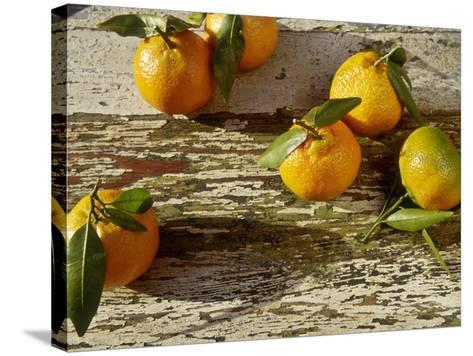 "Clementine Fruits & Leaves (Citrus Reticulata ""Clementine"")-Jacqui Hurst-Stretched Canvas Print"