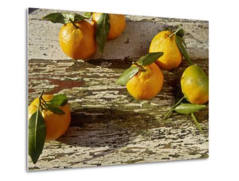 "Clementine Fruits & Leaves (Citrus Reticulata ""Clementine"")-Jacqui Hurst-Metal Print"