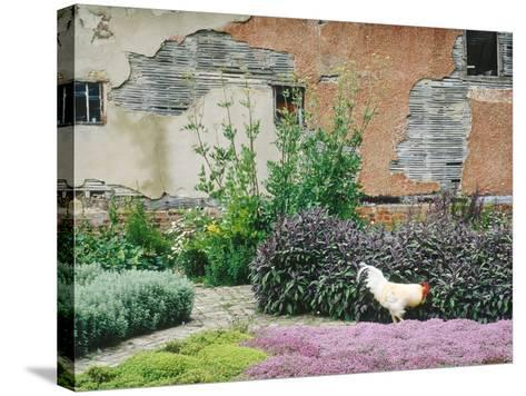 Formal Herb Garden Thyme-Jacqui Hurst-Stretched Canvas Print