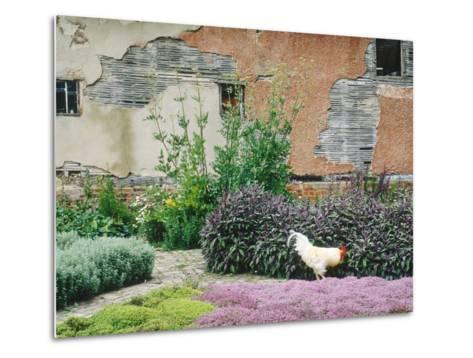 Formal Herb Garden Thyme-Jacqui Hurst-Metal Print