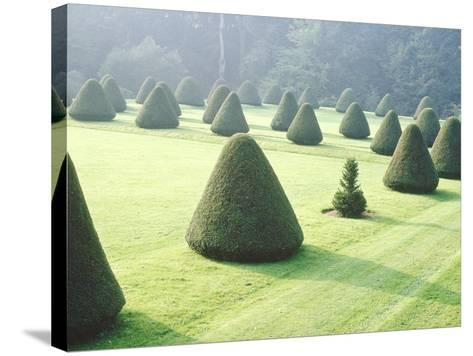 Yew Topiary Parnham House, Dorset-Jacqui Hurst-Stretched Canvas Print