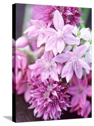 """Bunch 0F Allium Scoenoprasum, Allium Unifoloium & Allium Oreophilum """"Zwanenburg""""-Lynn Keddie-Stretched Canvas Print"""