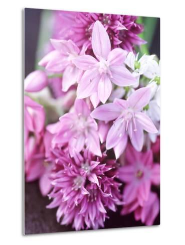 "Bunch 0F Allium Scoenoprasum, Allium Unifoloium & Allium Oreophilum ""Zwanenburg""-Lynn Keddie-Metal Print"