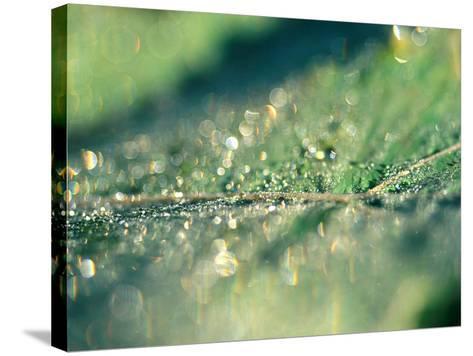 Water Droplets on Rib of Leaf-Lynn Keddie-Stretched Canvas Print