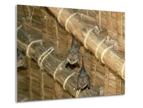 Yellow Wing Bats, Nairobi, Africa-David Cayless-Metal Print