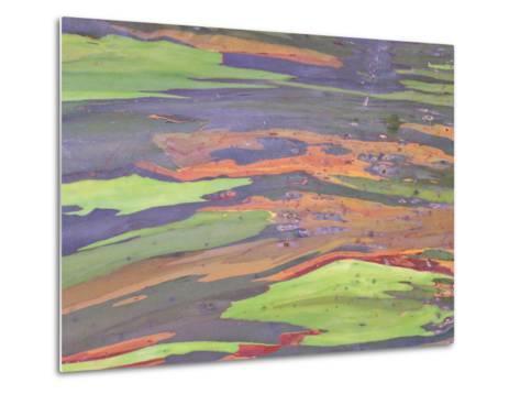 Rainbow Eucalyptus, Bark Pattern, Botanical Garden-Stan Osolinski-Metal Print