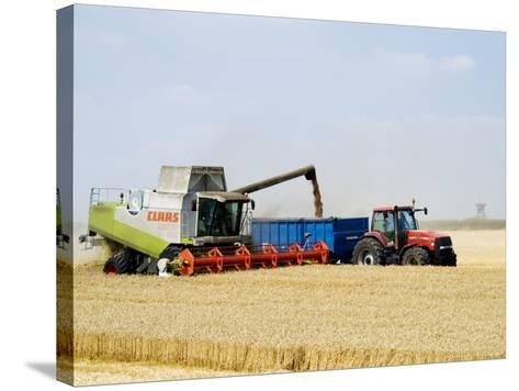 Combine Harvester Unloading Grain into Trailer, England-Martin Page-Stretched Canvas Print