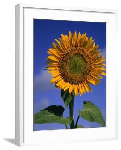 Sunflower-Eric Horan-Framed Art Print
