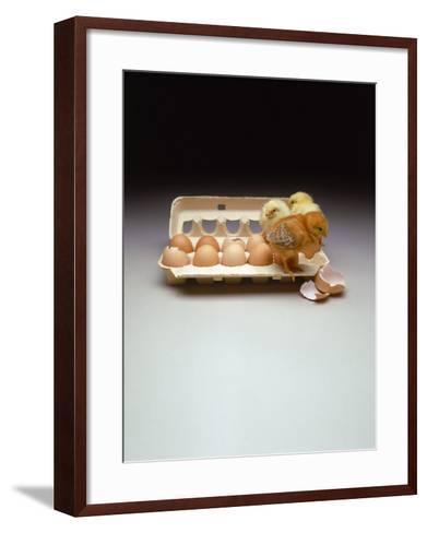 Chicks in a Carton of Eggs-Bob Kramer-Framed Art Print