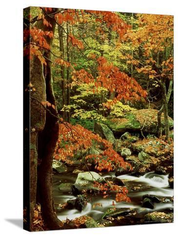 Fall Colour Along Middle Prong of Little River, USA-Willard Clay-Stretched Canvas Print