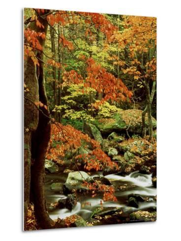 Fall Colour Along Middle Prong of Little River, USA-Willard Clay-Metal Print