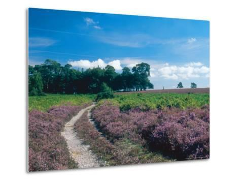 Bell Heather and Ling, Ibsley Common, Hampshire, UK-Ian West-Metal Print