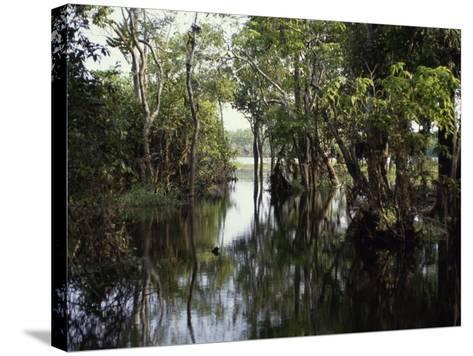 Amazon River, Brazil--Stretched Canvas Print