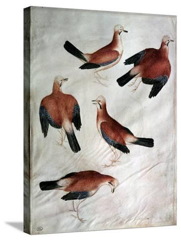 Five Jays-Antonio Pisani Pisanello-Stretched Canvas Print