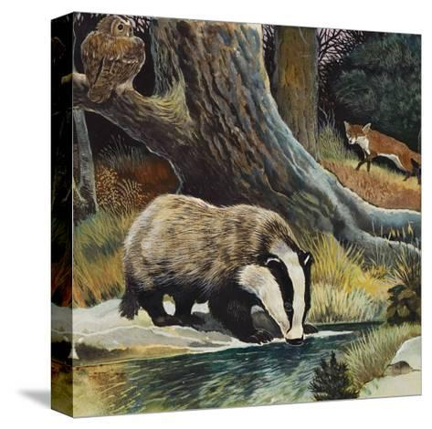 Badger, Fox, Owl and Mouse--Stretched Canvas Print