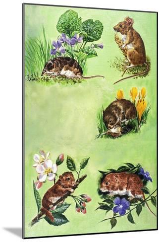 Mice, Voles and Shrews-Eric Tansley-Mounted Giclee Print
