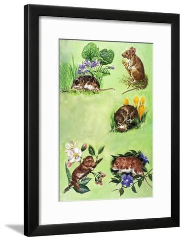 Mice, Voles and Shrews-Eric Tansley-Framed Art Print
