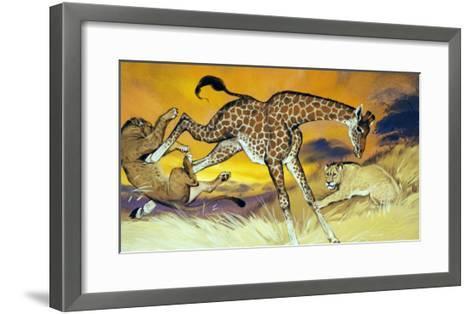 Giraffe Kicking Lion-Angus Mcbride-Framed Art Print