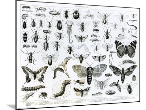 Entomology--Mounted Giclee Print