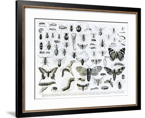 Entomology--Framed Art Print
