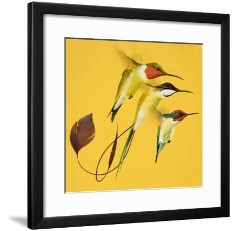 Humming Birds--Framed Art Print