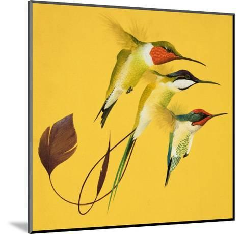 Humming Birds--Mounted Giclee Print