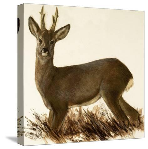 Roe Deer--Stretched Canvas Print