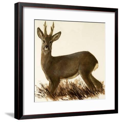 Roe Deer--Framed Art Print