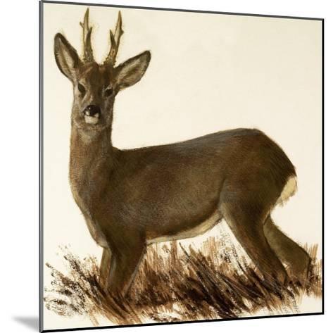 Roe Deer--Mounted Giclee Print