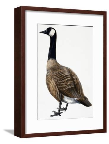 Brent Goose--Framed Art Print