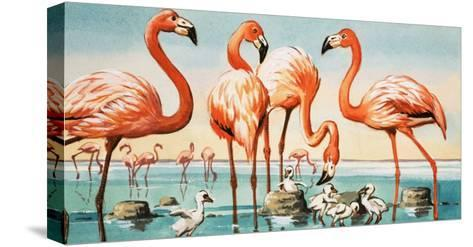Flamingoes--Stretched Canvas Print