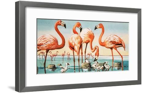 Flamingoes--Framed Art Print