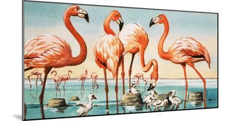 Flamingoes--Mounted Giclee Print