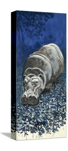 Hippopotamus--Stretched Canvas Print