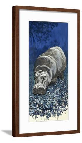 Hippopotamus--Framed Art Print
