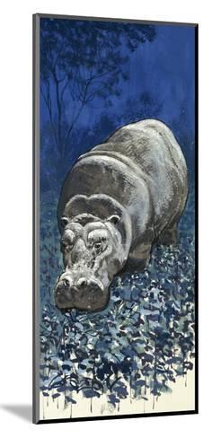 Hippopotamus--Mounted Giclee Print
