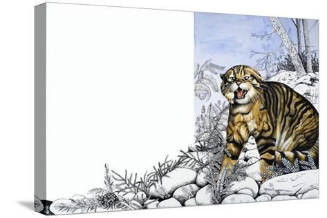 Nature's Kingdom: Hunter of the Highlands - the Wildcat-Susan Cartwright-Stretched Canvas Print