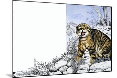 Nature's Kingdom: Hunter of the Highlands - the Wildcat-Susan Cartwright-Mounted Giclee Print