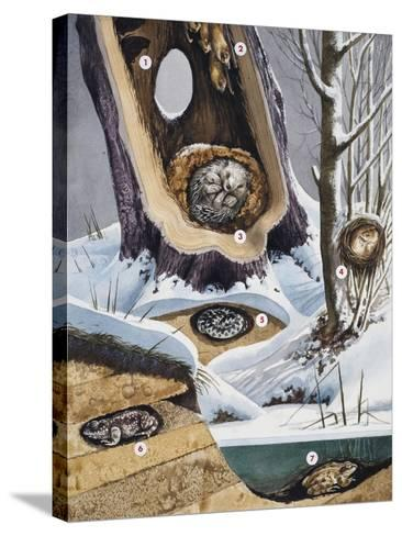 Hibernation--Stretched Canvas Print