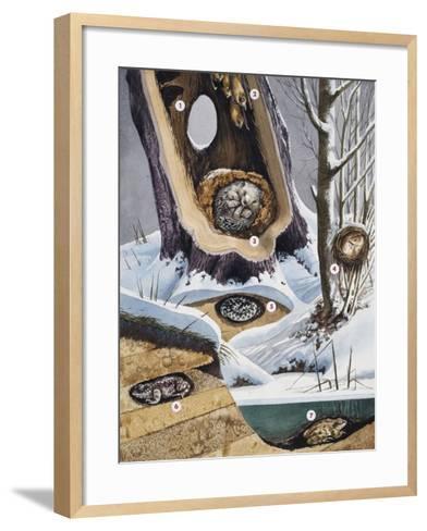 Hibernation--Framed Art Print