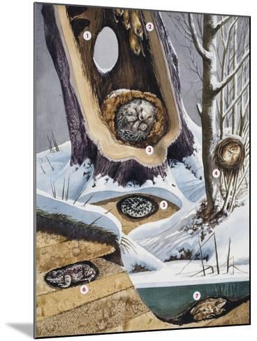 Hibernation--Mounted Giclee Print