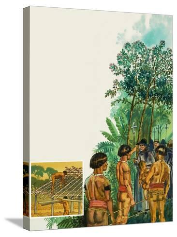 Cinchona Tree--Stretched Canvas Print