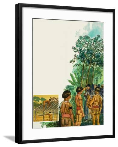 Cinchona Tree--Framed Art Print
