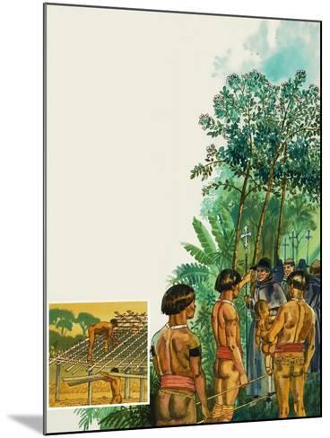 Cinchona Tree--Mounted Giclee Print